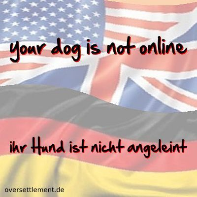 your dog is not online