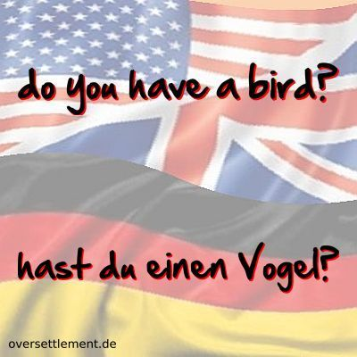 do you have a bird?