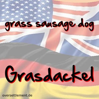 grass sausage dog
